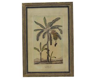 Botanical Wall Art Banana Tree