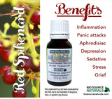 Red Spikenard Essential Oil - 0.5 fl oz (15 ml)