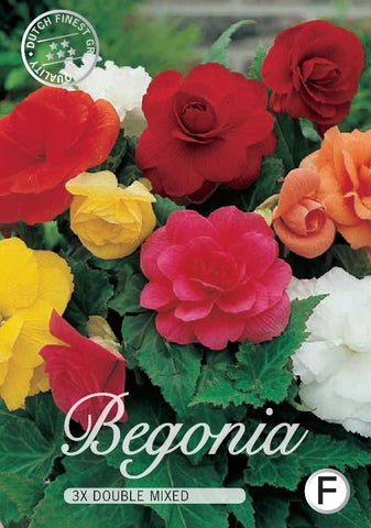 Begonia Double Mixed colours from Dutch Garden Bulbs online UK