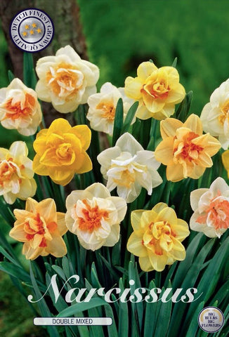 Narcissus double mixed pack of bulbs UK