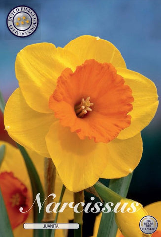 Narcissus Juanita yellow small daffodil flowers bulbs to buy in the UK