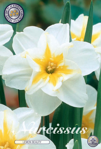 Narcissus lemon beauty small white daffodil with yellow centre bulbs UK