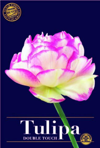 Tulipa Double Touch Tulip bulbs from Holland available online at Dutch Garden Bulbs UK