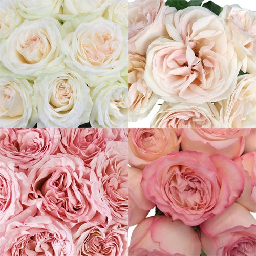 Budget Roses for Your Wedding Party Flowers Bouquets Centerpieces - Cost Less - Order Online Ship to Your Door - DIY
