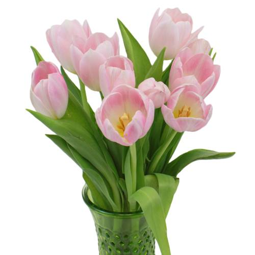 Budget Tulip Flowers for Mother's - Wedding - Party - Bouquets - Centerpieces - Cost Less - Order Online Ship to Your Door - DYI