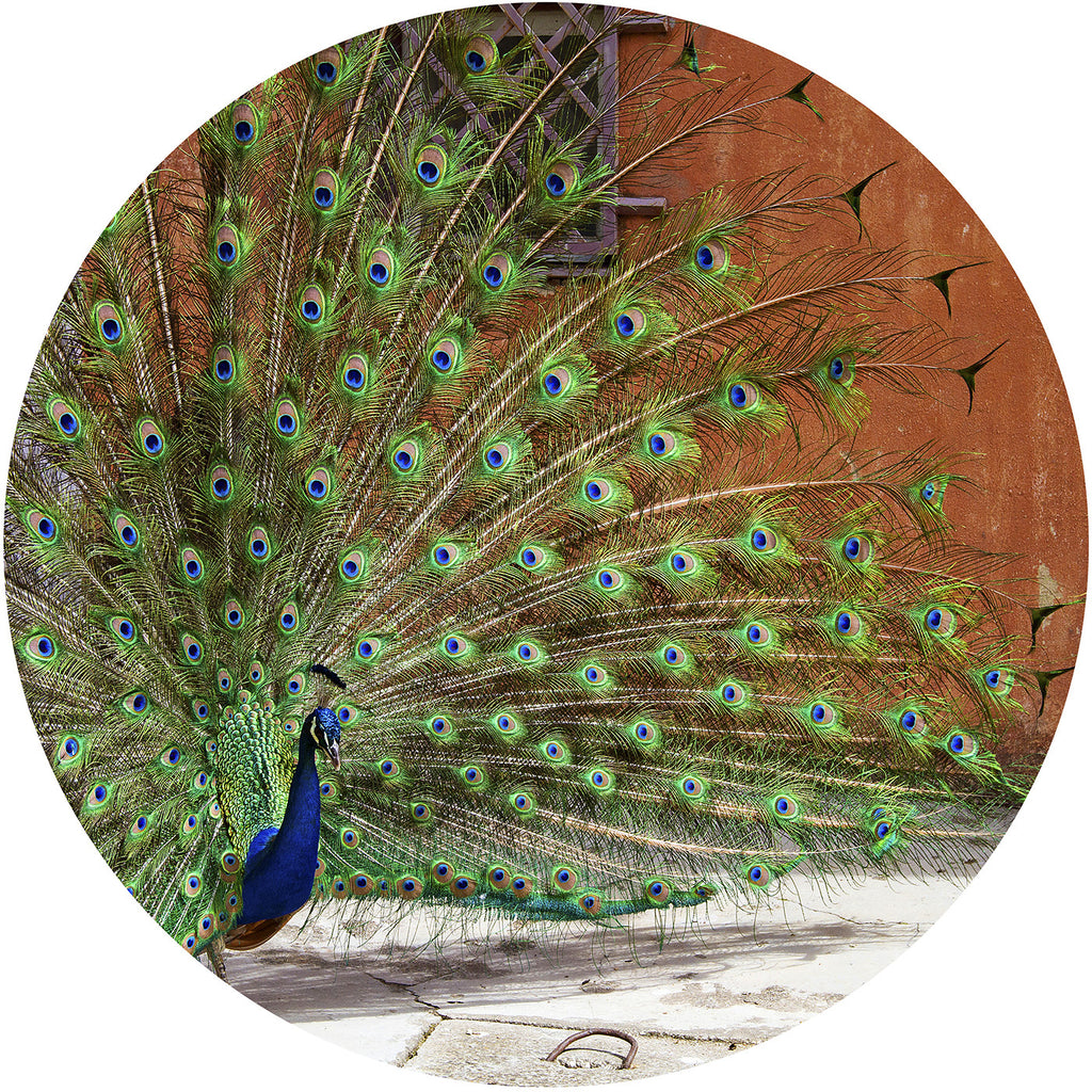 Cutting Board Tempered Glass Decorative Fine Art Photograph Peacock