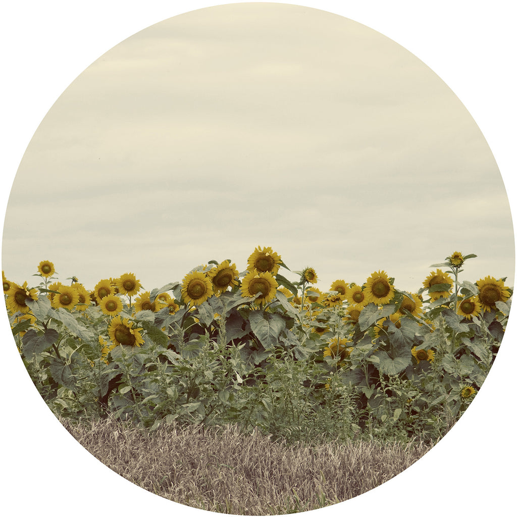 Cutting Board Tempered Glass Decorative Fine Art Field Sunflowers