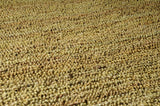 Surya Continental COT-1936 Gold Hand Woven Area Rug