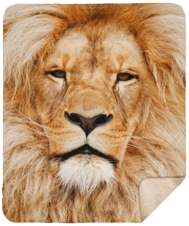 Lion Face Sherpa Blanket 50x60