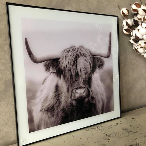 Framed Highland Cow Print