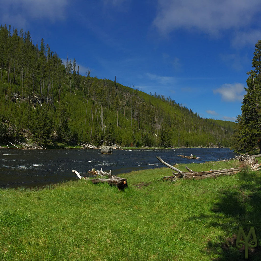 Fly Fishing The Firehole