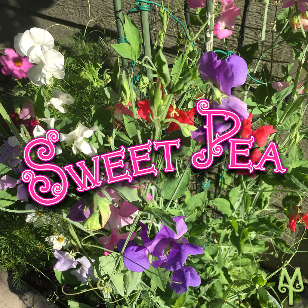 Bozeman Sweet Peas Are Ready