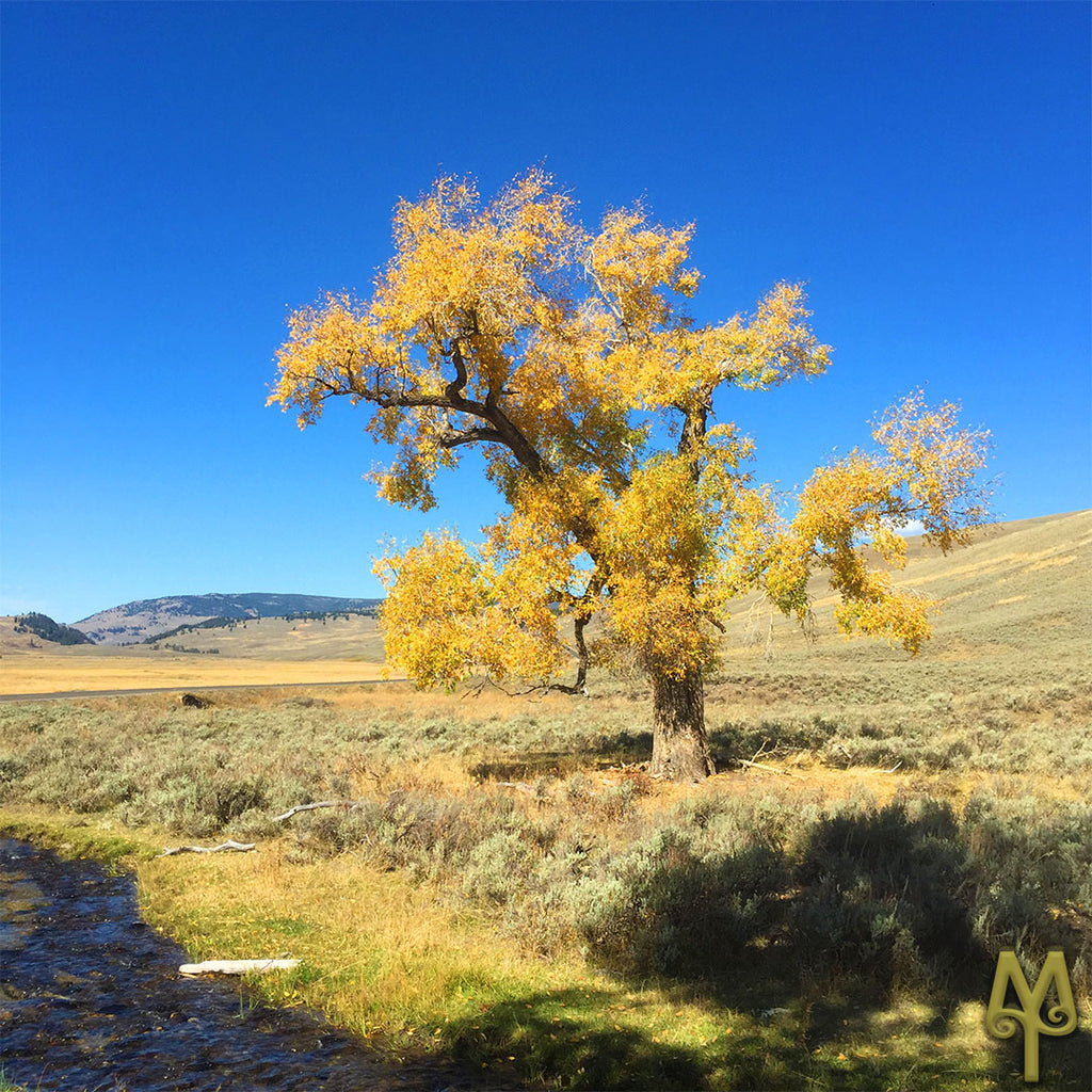 Fall Color In Yellowstone