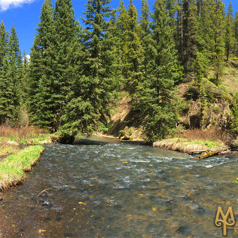 June on Hyalite Creek, Bozeman, photo by Montana Treasures
