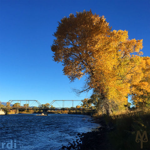 A golden, Fall morning on the Madison River at Varney Bridge