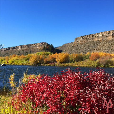 Fall colors are burning bright on the banks of the Madison River near the Palisades recreation area.