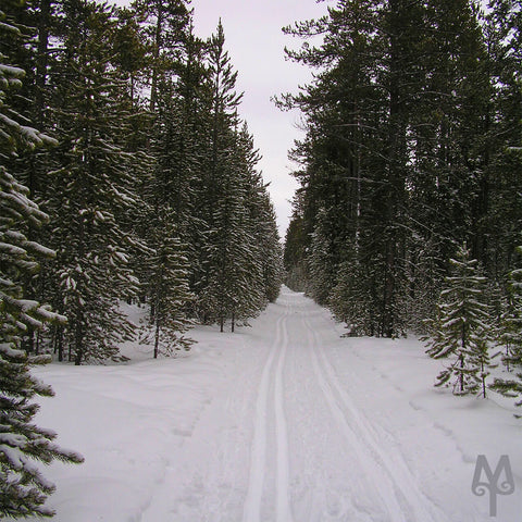 Riverside Cross Country Ski Trail, West Yellowstone, Montana