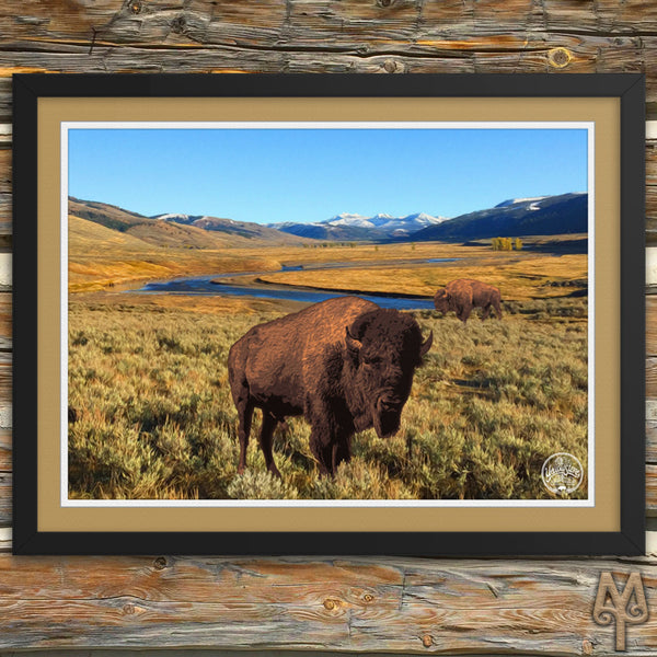 Yellowstone National Park, Bison, framed poster