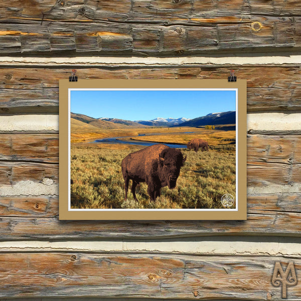Yellowstone National Park, Bison, unframed poster