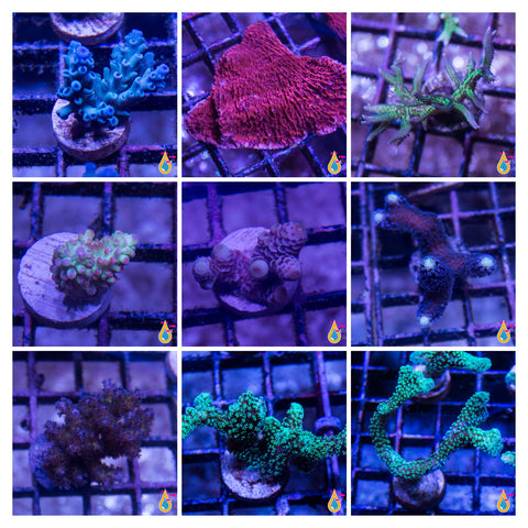 9 PIECE SPS FRAG PACK