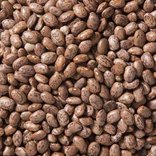 Organic Pinto Beans | Woodstock Farms