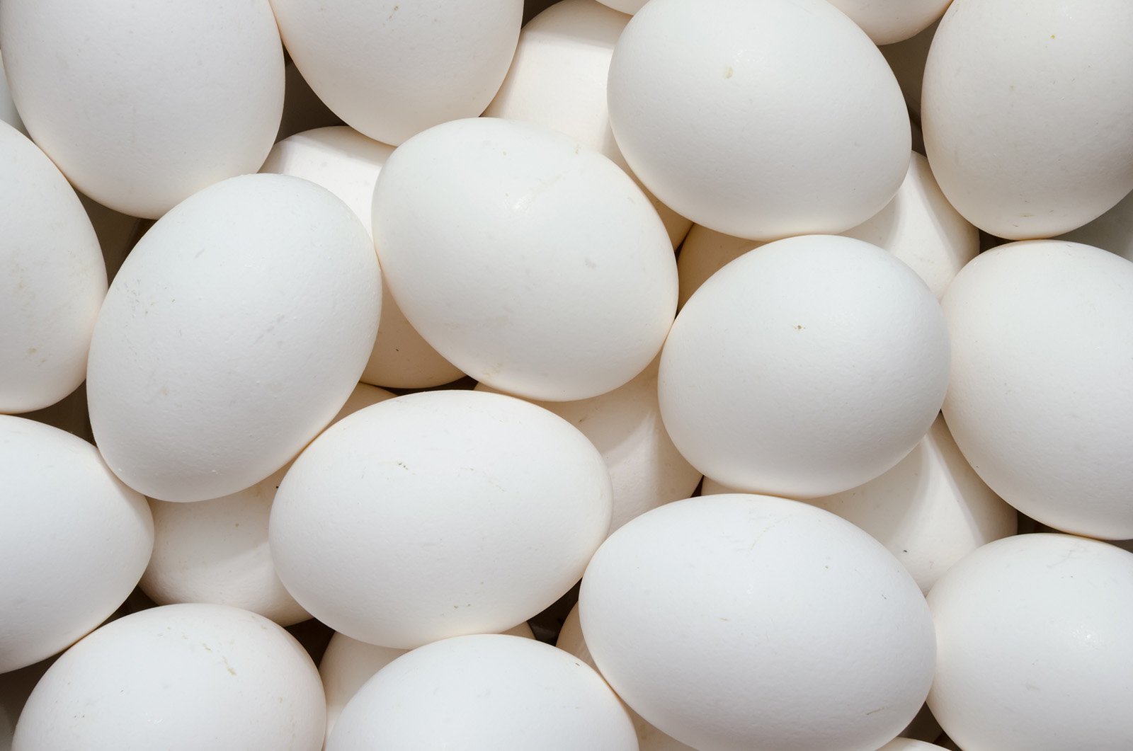 How much protein is in egg white?