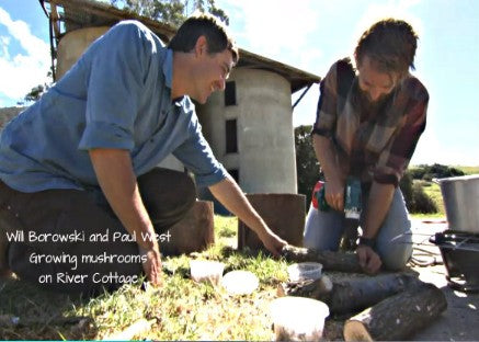 Forest Fungi on River Cottage: More to mushrooms