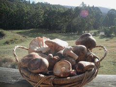 Basket of Shiitakes