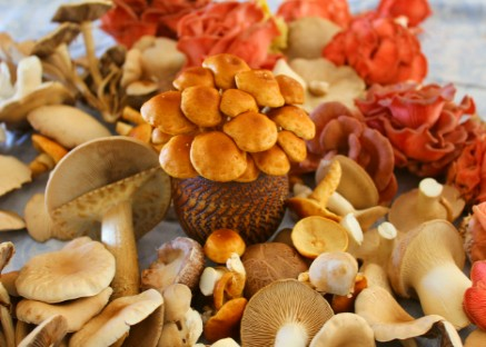How to grow gourmet mushrooms Free Guides