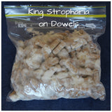 Buy King strophaira on dowels
