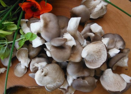 Forest Fungi sell oyster mushrooms
