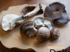 Forest Fungi Shiitakes and Blue Oysters