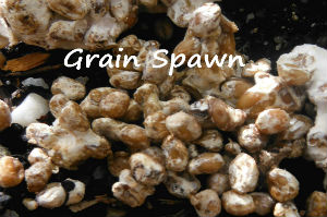 How to use Grain Spawn