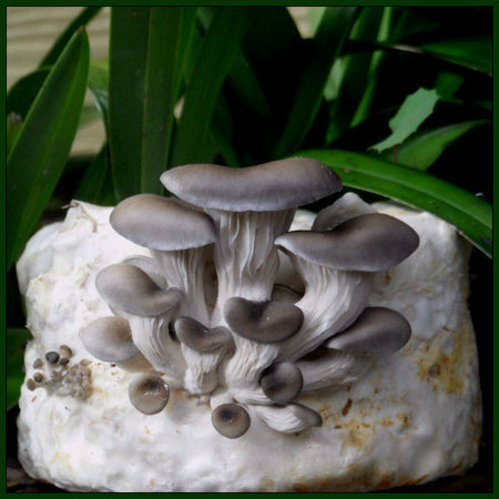 Forest Fungi – forestfungi