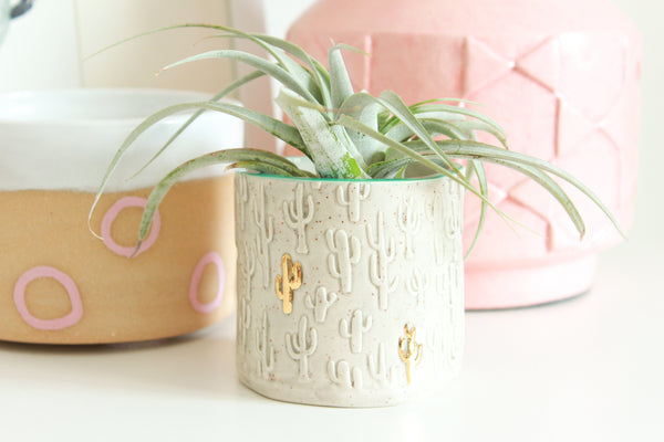 Gray Speckle and Jade Cactus Mini Planter / Plant Collection