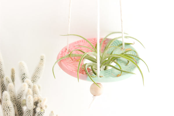 Matte Aqua and Coral Fern Air Plant Hanger / Plant Collection