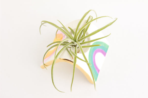 NEW! Mini Rainbow Arched Air Plant Holder
