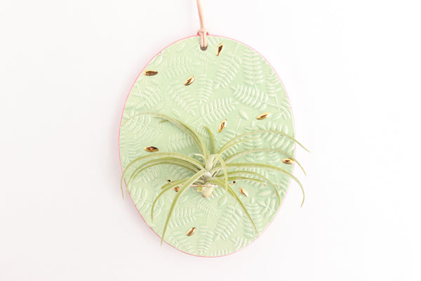 Mint and Coral Fern Air Plant Wall Hanging / Plant Collection