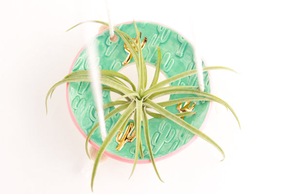 Jade/Peach Cactus Air Plant Hanger / Plant Collection