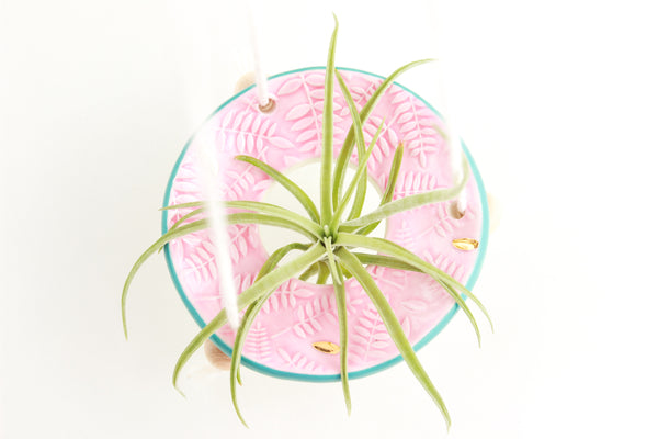 Pink/Turquoise Fern Air Plant Hanger / Plant Collection