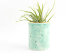 Gold Rimmed Mini Planter/Air Plant Holder
