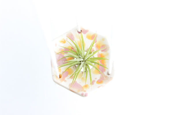 SALE! Mini Watercolor Splash Air Plant Hanger