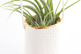 Mini Gold Rimmed Hanging Bud Vase