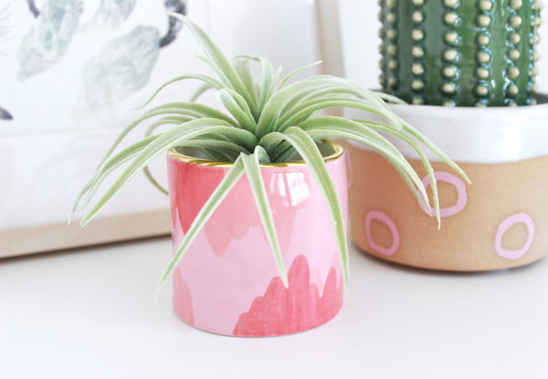 NEW! Pink Abstract Gold Rimmed Mini Planter
