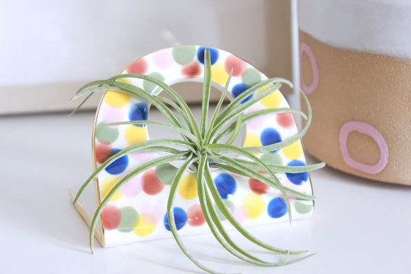 Multicolor Dot Air Plant Holder