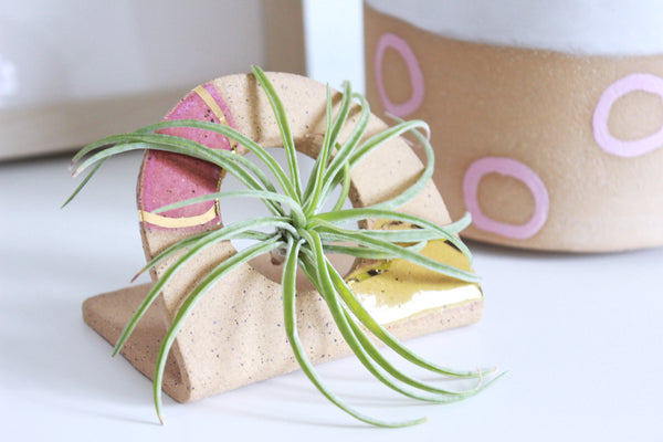 NEW! Abstract Speckled Stoneware Air Plant Holder