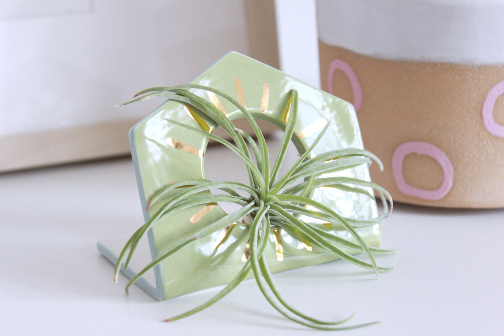 NEW! Sunburst Hexagon Air Plant Holder
