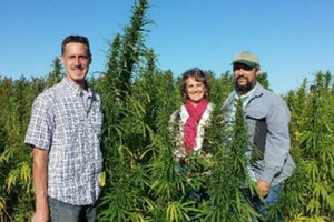 hemp farmers standing near hemp plants