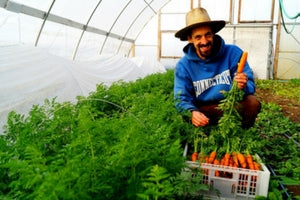 local farmer growing carrots