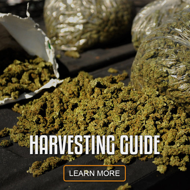 how to grow and harvest plants